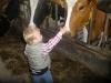 kinderopvang op een boerderij in Geesteren, gemeente Tubbergen